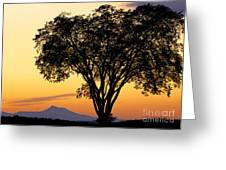 Elm At Twilight Greeting Card