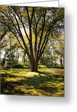 Elm In The Sunshine Greeting Card