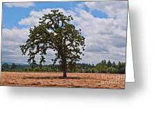 Elm Tree In Hay Field Art Prints Greeting Card