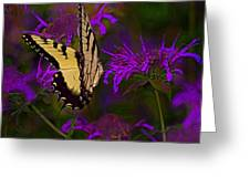 Elusive Butterfly Of Love Greeting Card by Mamie Thornbrue
