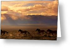 Elusive Wild And Free Mustangs Greeting Card by Jeanne  Bencich-Nations