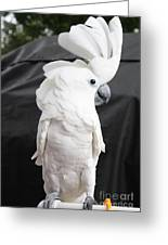 Elvis The Cockatoo II The Profile Shot Greeting Card