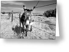 Elwood In Montana Greeting Card