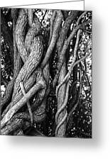 Embracing Rooted Love Greeting Card