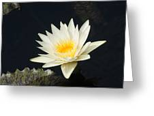 Embracing The Day... Greeting Card
