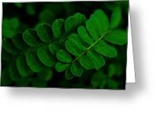 Emerald Bracelets Greeting Card