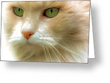 Emerald Eyes Greeting Card