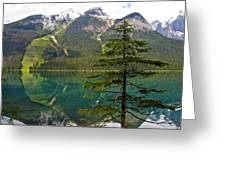 Emerald Lake Reflection And Pine Tree In Yoho National Park-british Columbia-canada Greeting Card
