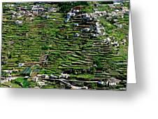 Emerald Madeira Terraces Greeting Card