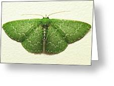 Emerald Moth Greeting Card
