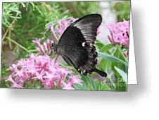 Emerald Peacock Swallowtail Butterfly #5 Greeting Card