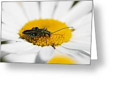 Emerald Yellow And White Greeting Card