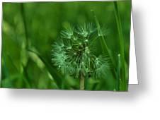 Emeralds Greeting Card