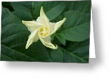 Emerging Angel Greeting Card