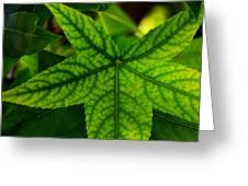 Emerging Greens Greeting Card