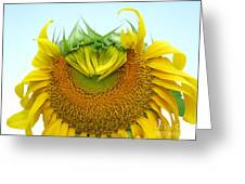 Emerging Sunflower Greeting Card