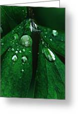 Emerald Rain Greeting Card