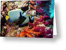 Emperor Angelfish On A Reef Greeting Card