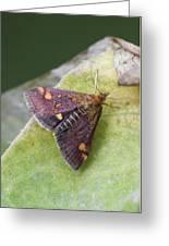 Emperor Moth Greeting Card