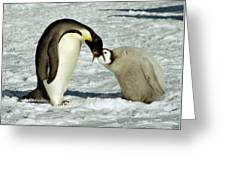 Emperor Penguin Chick Feeding Greeting Card