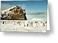 Emperor Penguin Colony Cape Washington Antarctica Greeting Card