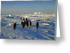 Emperor Penguin Group Walking On Ice Greeting Card