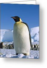 Emperor Penguin Portrait Antarctica Greeting Card