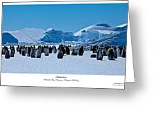 Emperor Penguin Rookery Greeting Card by David Barringhaus