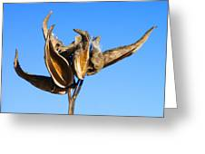 Empty Milkweed Pods Against Blue Sky Greeting Card