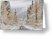 Empty Road Passing Through A Forest Greeting Card