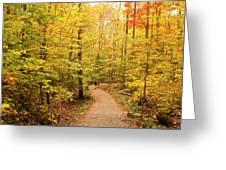 Empty Trail Runs Through Tall Trees Greeting Card