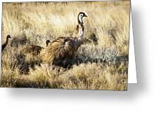 Emu Chicks Greeting Card by Tim Hester