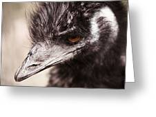 Emu Closeup Greeting Card by Karol Livote