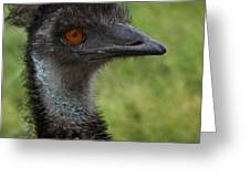 Emu With Red Eye Greeting Card