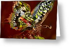 Enchanted Butterfly. First.  Greeting Card