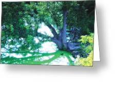 Enchanted Forest 15 Greeting Card