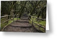 Enchanted Forest Garajonay National Park La Gomera Spain Greeting Card