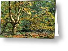 Enchanted Forest Tree Greeting Card