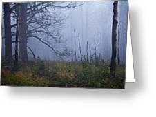 Enchanted Mist - Casper Mountain - Casper Wyoming Greeting Card