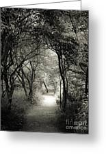 Enchanted Path Summer Greeting Card