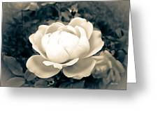 Enchanted Rose Greeting Card
