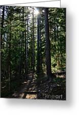 Enchanted Trail Greeting Card