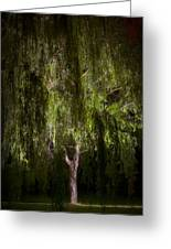Enchanted Willow Greeting Card