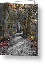 Enchanted Woods Greeting Card by Linsey Williams