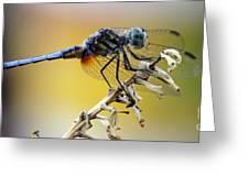 Enchanting Dragonfly Greeting Card