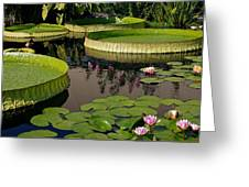 Enchanting Water Garden Greeting Card