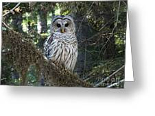 Encounter With An Owl Greeting Card by Heike Ward