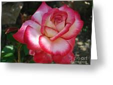 End Of June Bloom Greeting Card