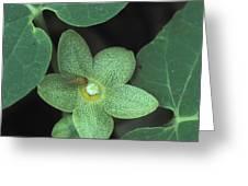 Endangered Flora Greeting Card