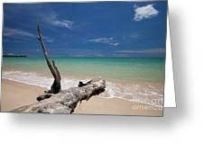 Endless Paradise Greeting Card by Pete Reynolds